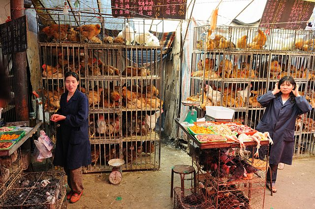 640px-Chicken_market_in_Xining,_Qinghai_province,_China