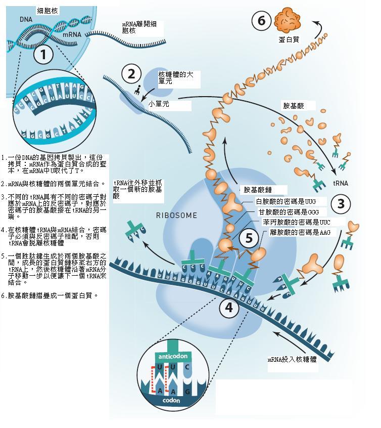 諾貝爾化學獎圖三