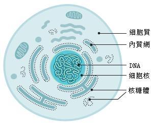 諾貝爾化學獎圖二.JPG