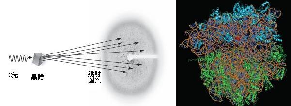 諾貝爾化學獎圖四