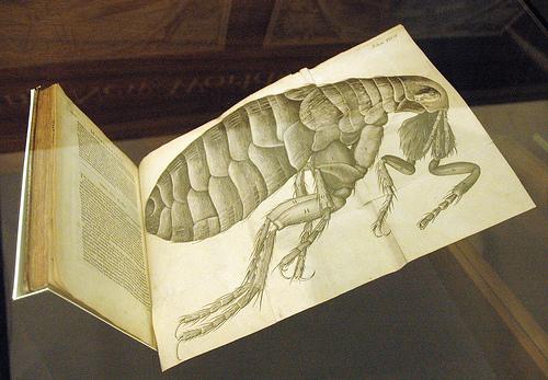 微物圖解書中的跳蚤圖