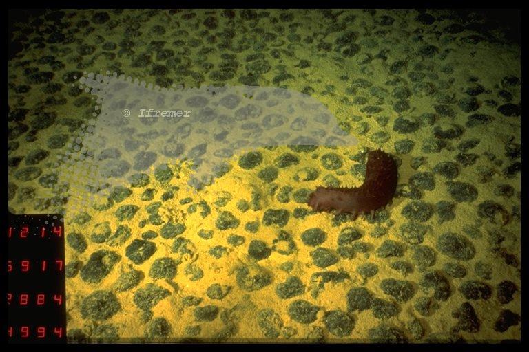 錳結核沙灘