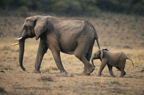 グローバルフォント 島フォント : 象の足チェルノブイリ