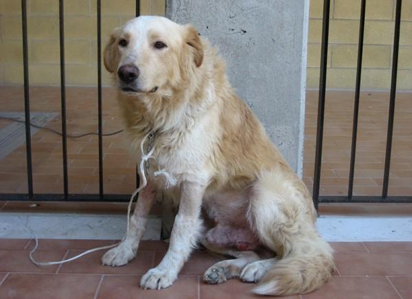 sn-dogcancer