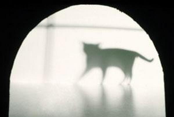 Schrodinger_Cat2