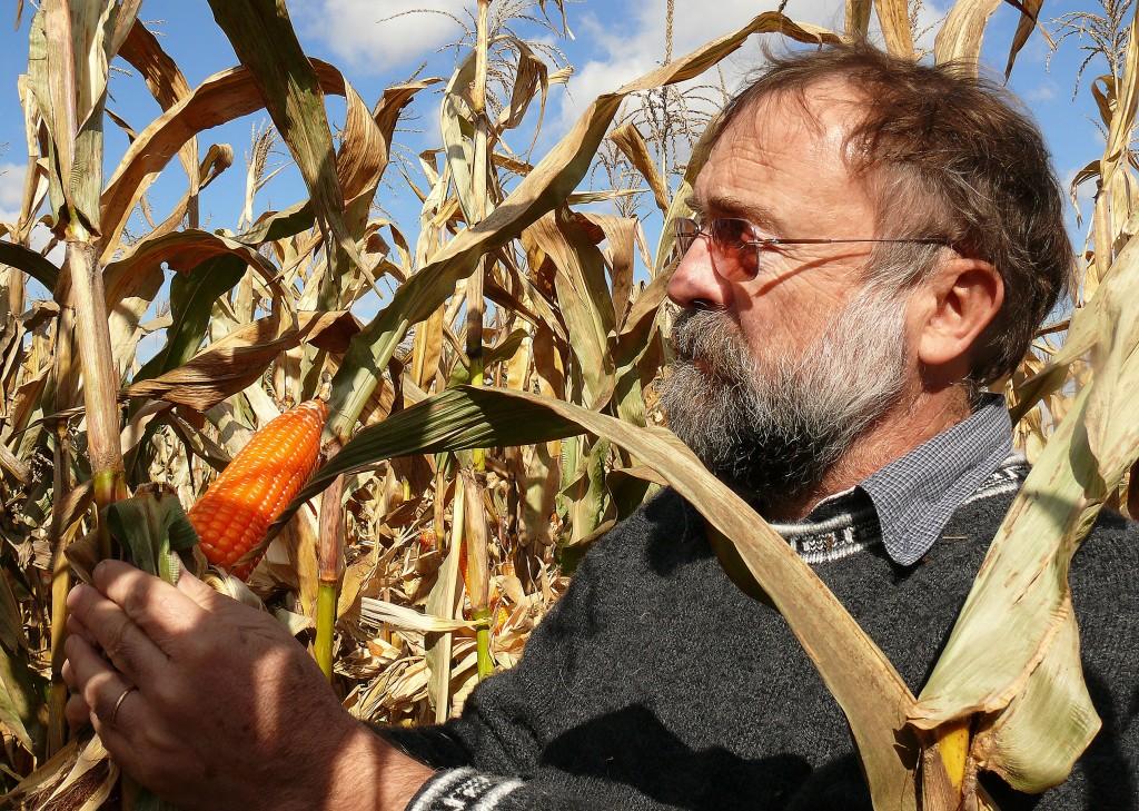 普渡大學的Rocheford博士,與他的橘色玉米。 圖片來源:Purdue