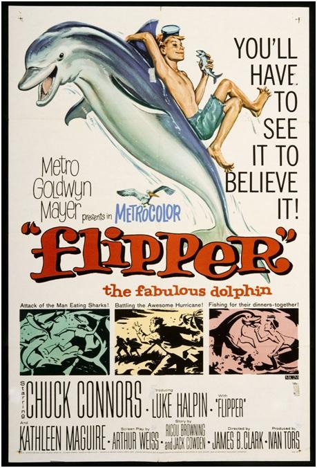 圖一:1963年夏天上映的美國喜劇強片「海豚的故事」的電影海報。影片英文原名「flipper」意為海豚的胸鰭,在電影裡則是主角海豚的名字。(圖片取自於維基百科)