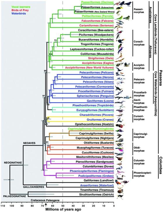 利用全基因體資料重建的鳥類親緣關係樹(Jarvis, E. D., et al. Science 2014)