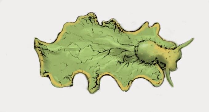 綠葉海天牛(Elysia chlorotica)。圖片來源:wiki