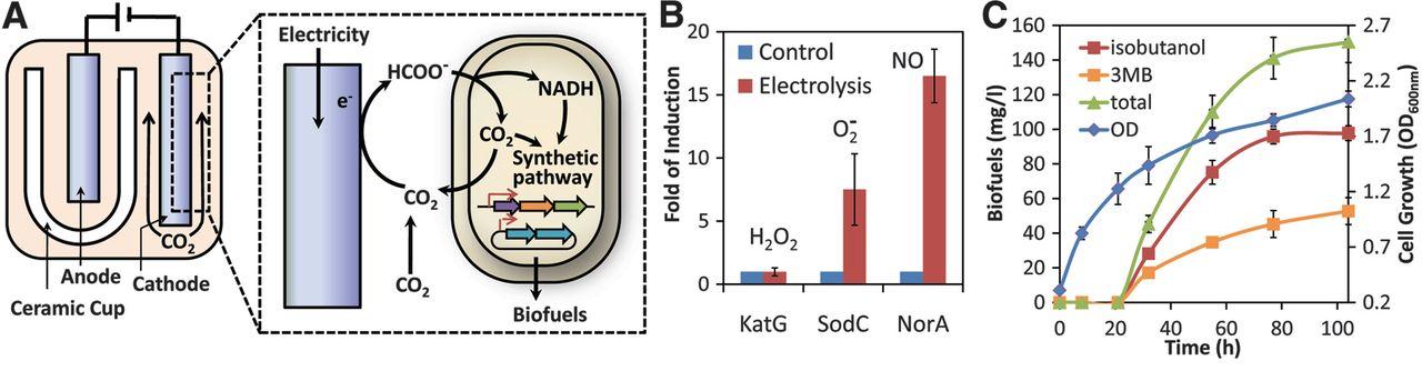 【能源契機】結合細菌與晶片的仿生葉
