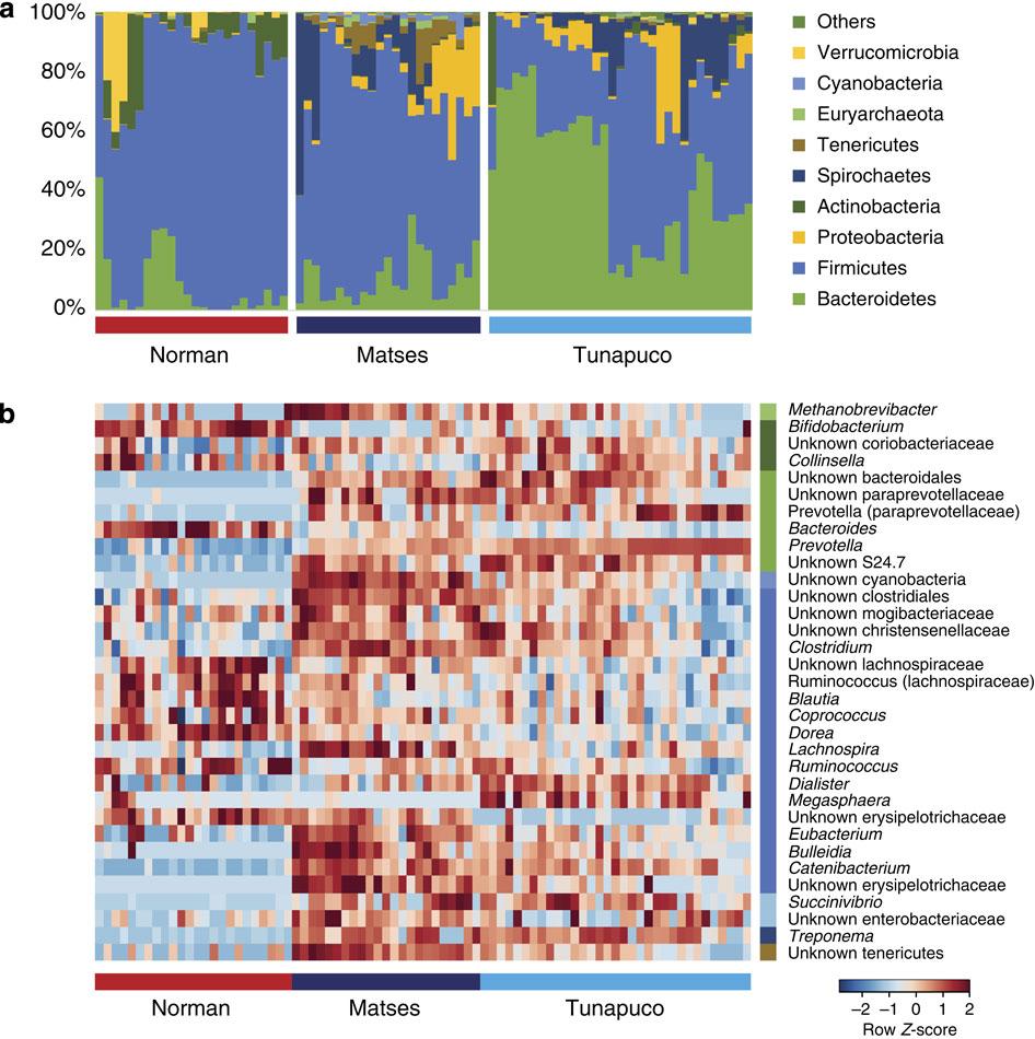 三個族群的腸道菌分析結果。圖片來源:Nature Communications