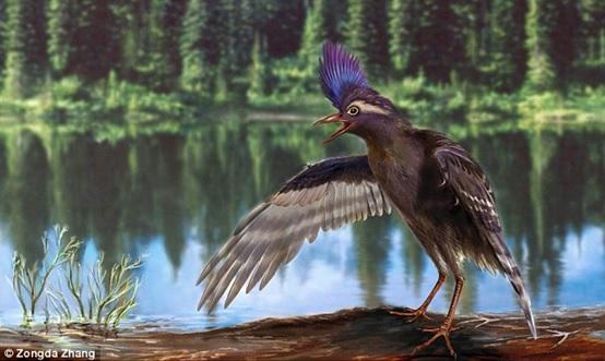 彌曼始今鳥(Archaeornithura meemannae)復原圖(中科院古脊椎所張宗達繪)