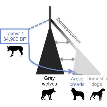 家犬的演化(P. Skoglund, et al. Curr Biol. 2015 May; DOI: http://dx.doi.org/10.1016/j.cub.2015.04.019)
