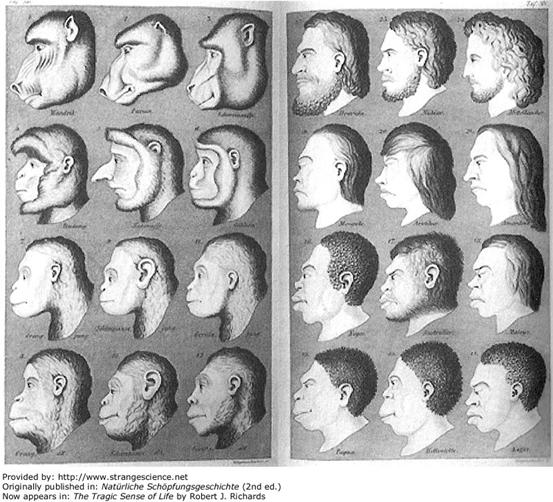 圖三:黑克爾的暢銷作「創世自然史(Natürliche Schöpfungsgeschichte)」的附圖。黑克爾以此圖表達各種猿猴(左幅)和人種(右幅)從外形就可觀察出進化程度的差異。黑克爾以「形態和猿猴的相似程度」定義了十二個人類「物種(species)」, 認為愈不樣猿猴的進化程度愈高(右幅右上),愈像猿猴的進化程度就愈低(右幅左下)。以今日生物學知識回顧黑克爾的分類法毫無科學根據。有趣的是這張附圖只出現在德文原文的版本裡,在之後兩款英譯本中皆未使用。圖片取自網站Strange Science (Public domain)。