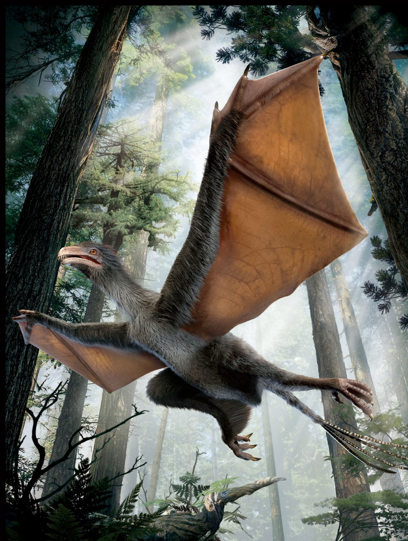 bat-winged-dinosaur-illustration