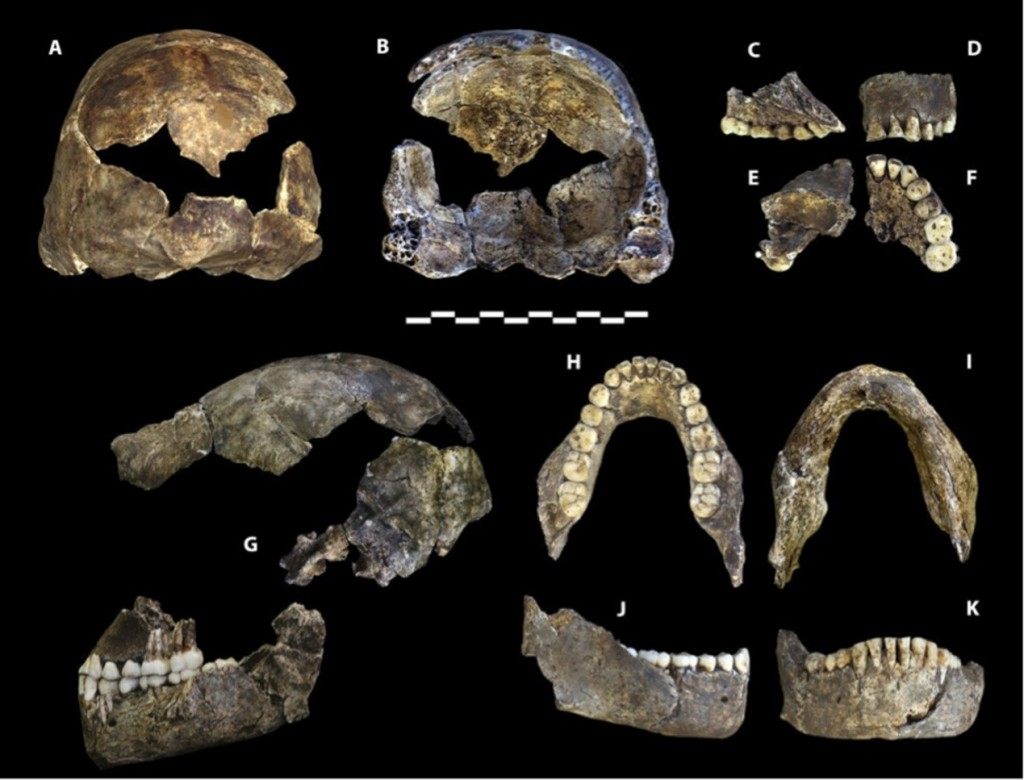 納萊蒂人的頭骨化石(Berger, Lee R. et al. (2015). eLife 2015;4:e09560)
