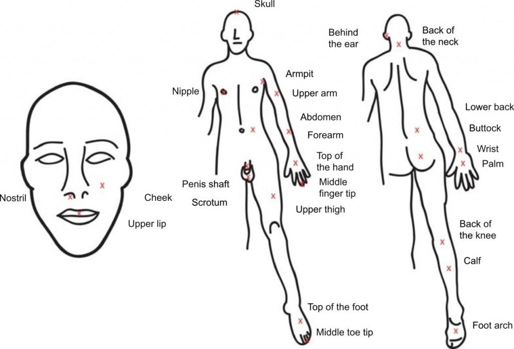 紅色X標記了Michael Smith實驗蜂蟄疼痛程度的身體部位(M. L. Smith, PeerJ 2014)
