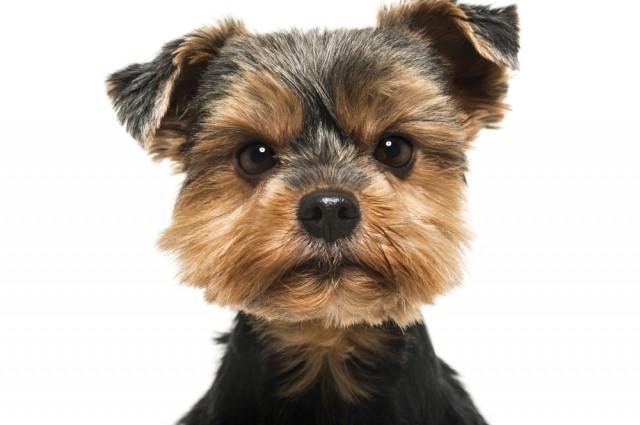 【寵物專欄】狗狗討厭不與飼主合作的人