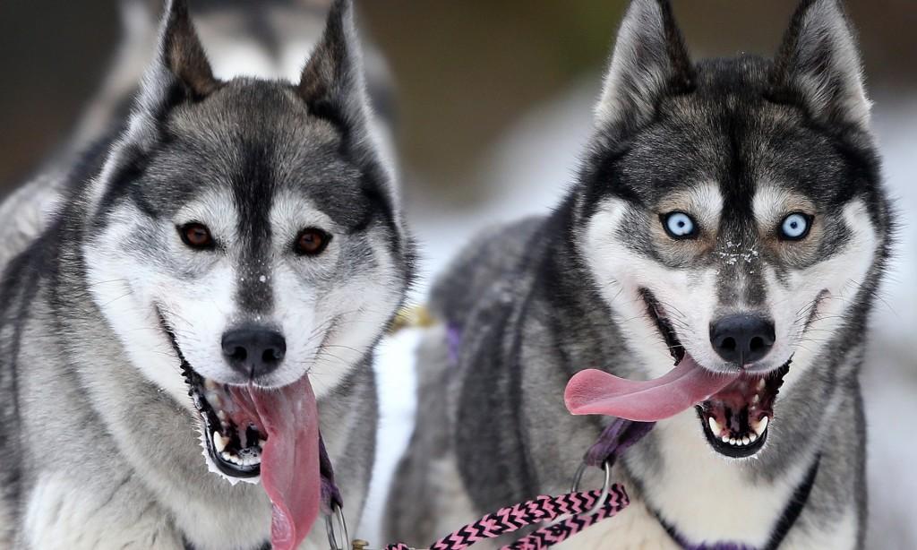 【生物考古】狗狗可能起源自東南亞