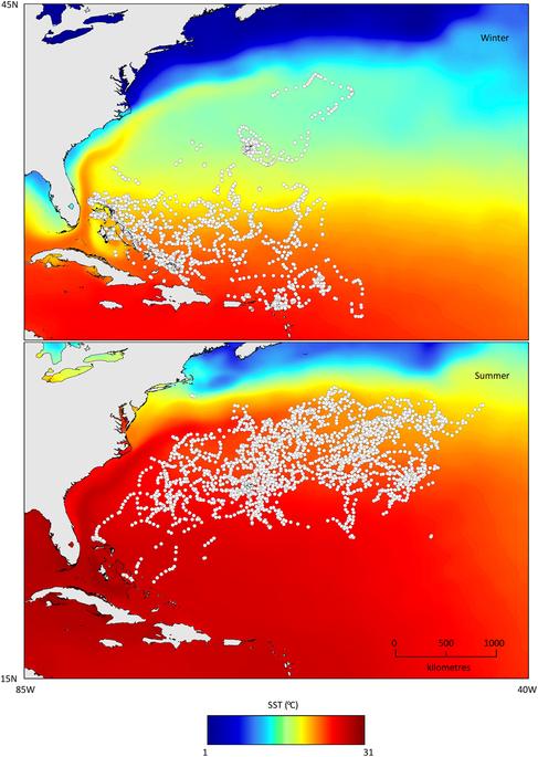 虎鯊冬天(上圖)與夏天(下圖)的活動區域。 圖片來源:Scientific Reports