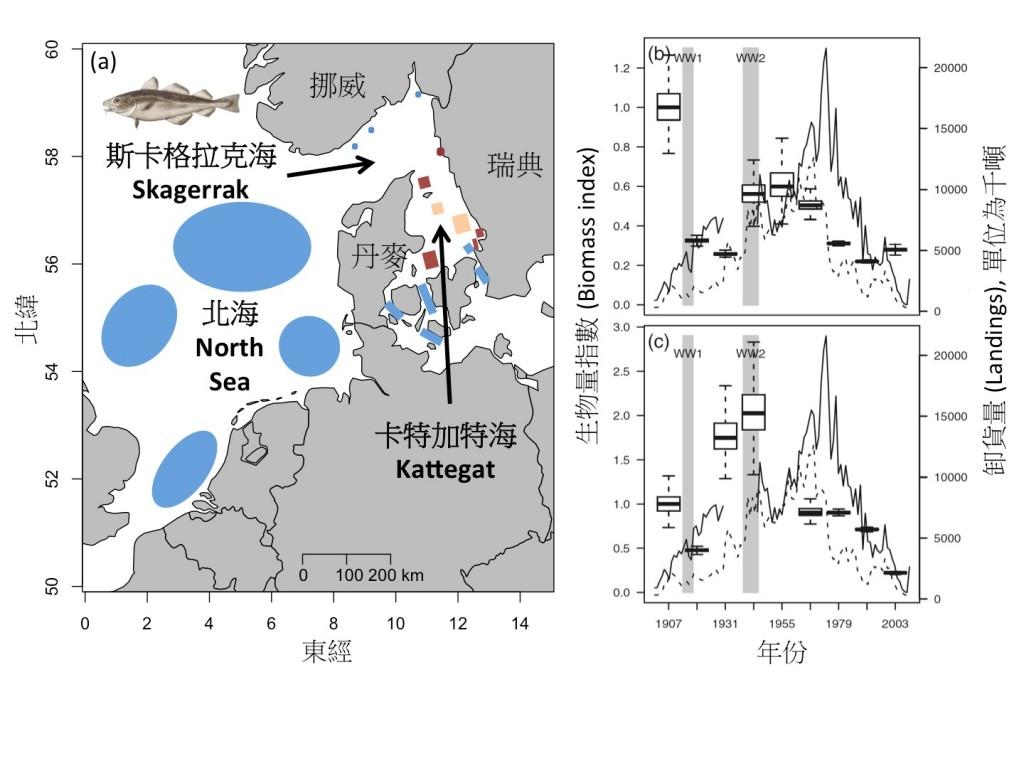 大西洋鱈魚在北海、斯卡格拉克海及卡特加特海的產卵場概略分布圖(a),以及挪威和丹麥在1907-2003年間於斯卡格拉克海(b)和卡特加特海(c)海域捕捉鱈魚的漁獲記錄。在(a)圖中藍色區塊為現存的產卵場,暗紅色區塊則為過去曾經存在的產卵場,膚色區塊為面臨存續危機的產卵場; (b)與(c)圖中實線為瑞典的漁獲數字,虛線為挪威的漁獲數字, 灰色區域的WW1 及WW2代表第一次和第二次世界大戰期間。(a)圖仿繪自Figure 3 in Jonsson et al. (2016), Fisheries Oceanography, 25, 210–228; 左上方的鱈魚繪圖取自維基百科 (NOAA Photo Library); (b)與(c)圖截自Fig.4 in Bartolino et al. (2012) Canadian Journal of Fisheries and Aquatic Sciences, 69, 833-841。