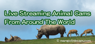 Live Streaming Animal Cams From Around The World 該網站提供世界各地,各種動物的Live cam list,觀察牠們真的非常有趣!
