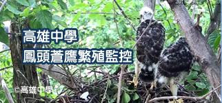 鳳頭蒼鷹繁殖監控-高雄中學