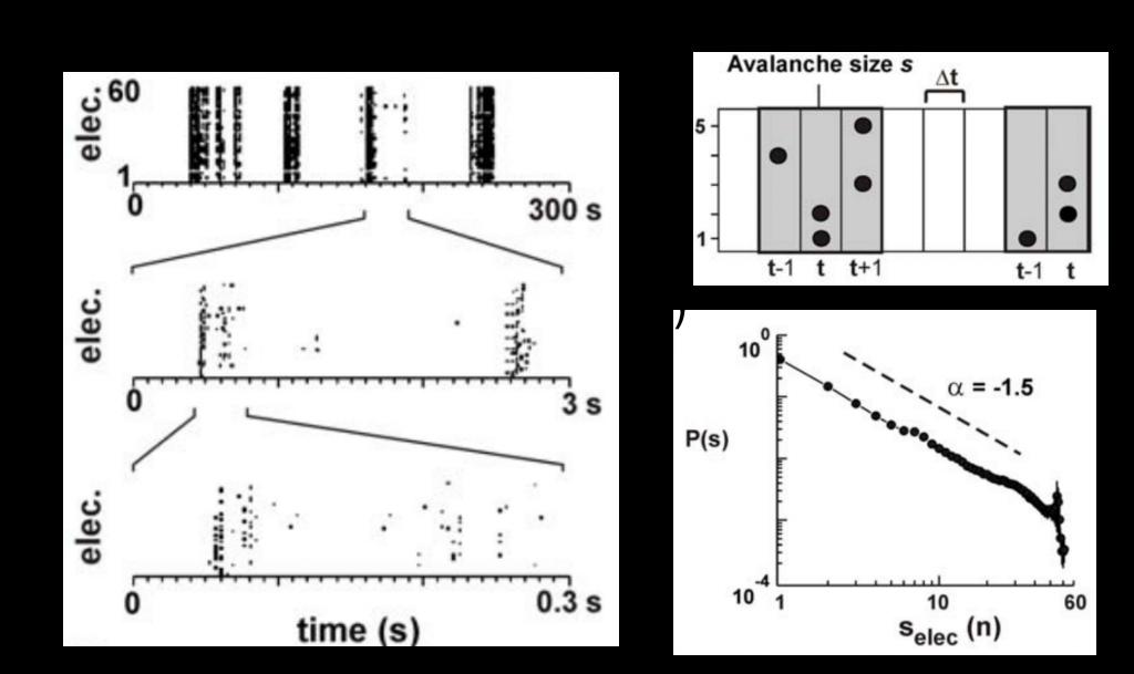 圖三:圖(A)為多電極振列量測到培養在培養基上神經網路的反應,黑點表示電極量到動作電位。圖(B)表示如何定義自發反應的大小s。圖(C)呈現了自發反應的大小與出現機率的分佈情形,兩座標軸皆為以10為底的log軸。本圖取自[8]。
