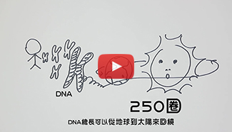 DNA修補機制