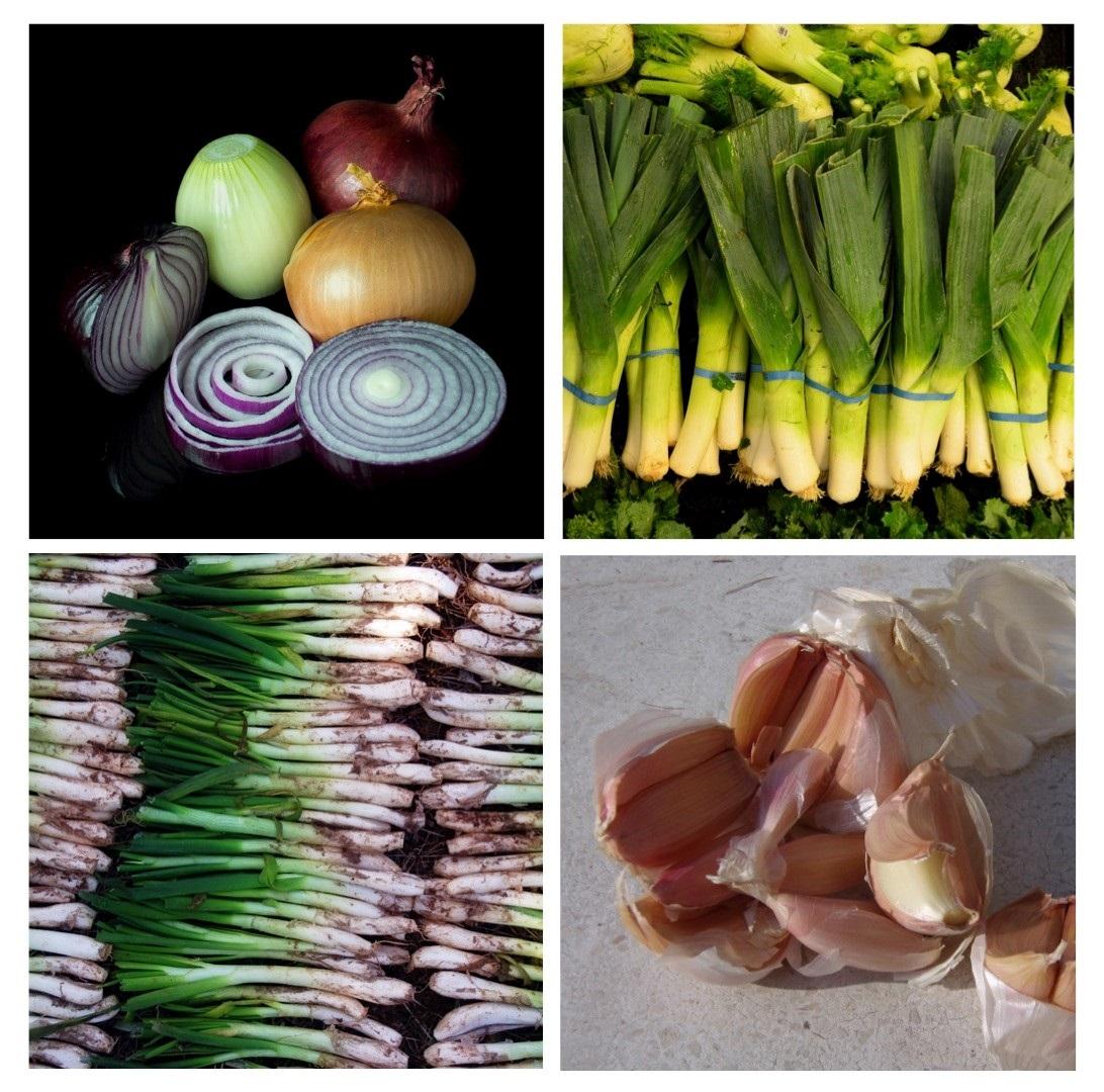 幾種常見的蔥屬植物食材:洋蔥(左上)、韭蔥(右上)、青蔥(左下)、蒜(右下)。圖片來源:維基百科。