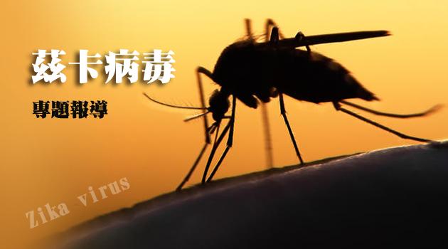 【週末茲卡專題報導】茲卡病毒的抗蚊大作戰