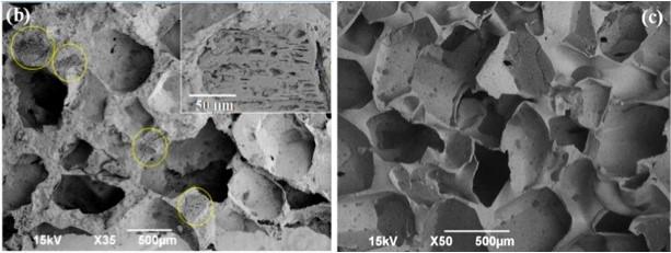 圖2:掃描式電子顯微鏡(Scanning electron microscope , SEM)下的泡綿結構[3]。左圖為填加咖啡渣後的泡綿,右圖為未添加咖啡渣前的泡綿