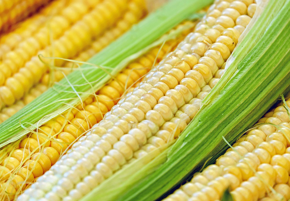corn-1605664_960_720