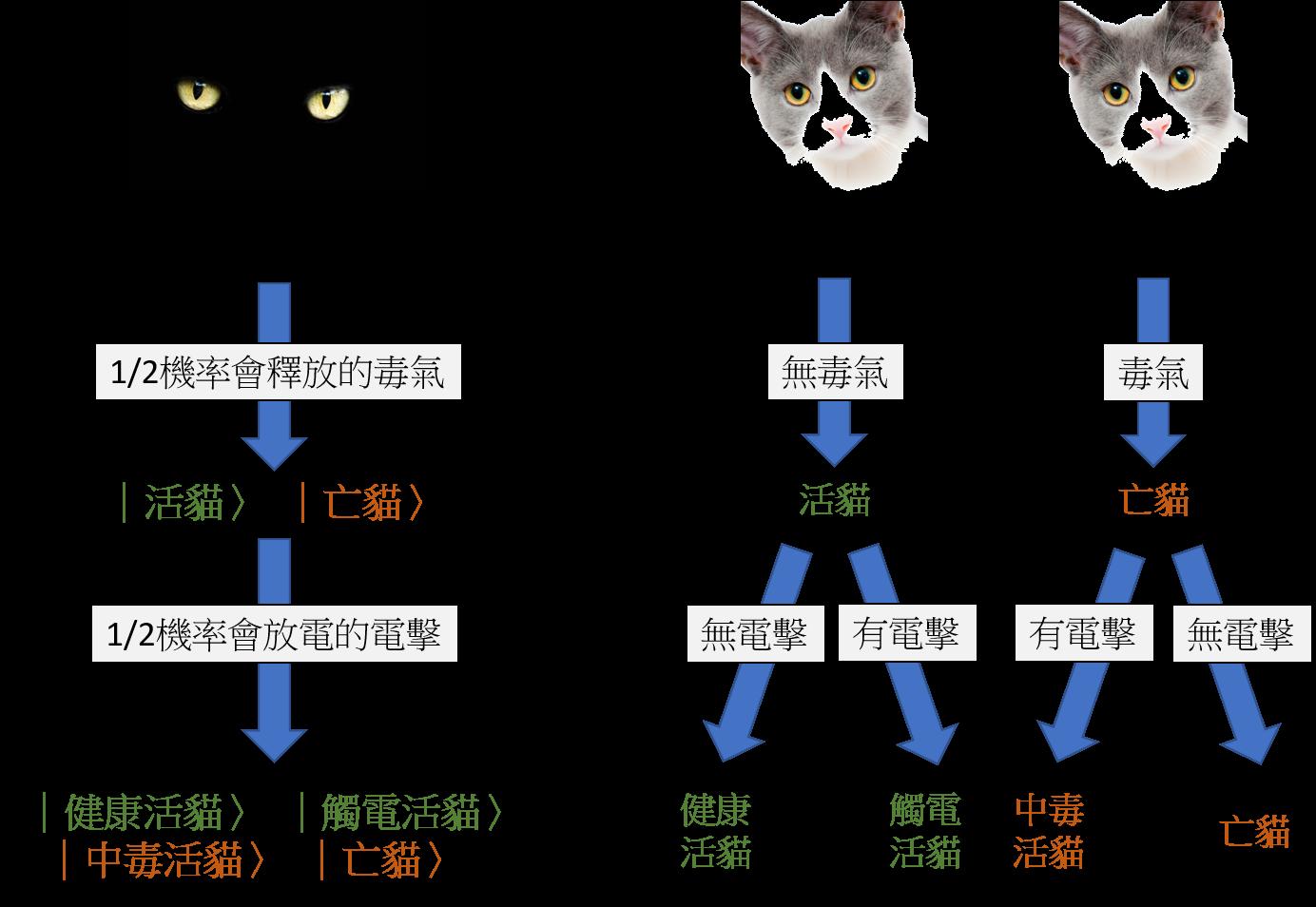 圖一、薛丁格的貓是量子版本的貓。我們用物理學家習慣的符號寫出量子貓的各種狀態。