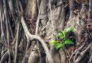 植物的側根如何「遇水則發」?