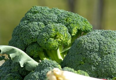 能抑制癌症的青花菜