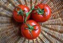 發現新的番茄風味基因