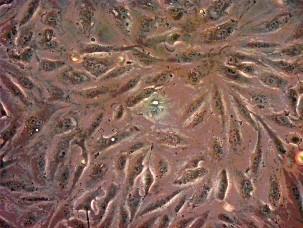 【陽明大學】 99-B2 利用流式細胞儀分析癌細胞週期及基因功能